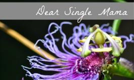 Dear Single Mama