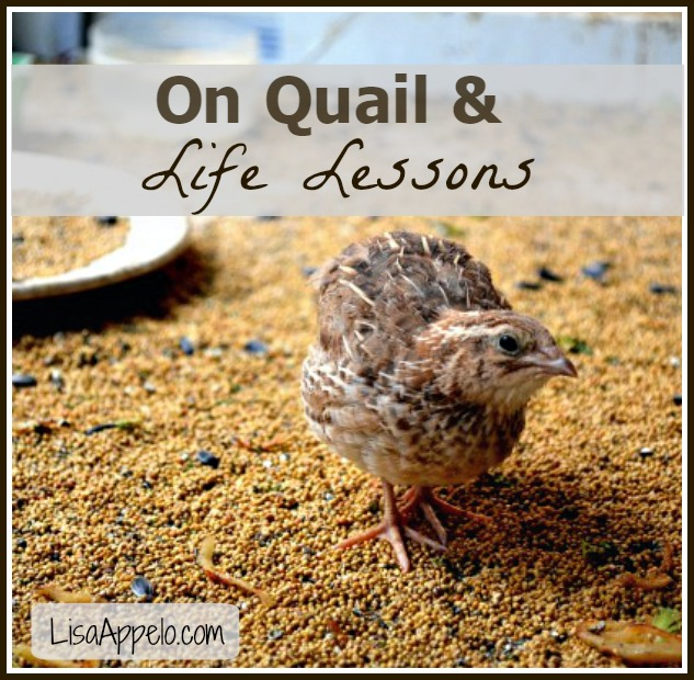 quail article pin