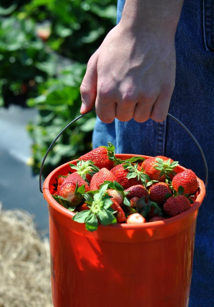strawberry zach bucket