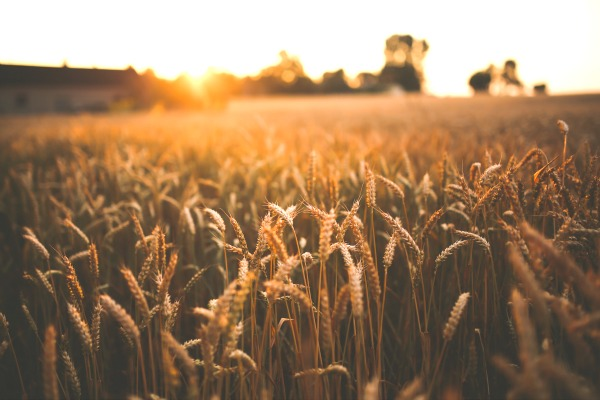 When the enemy asks to sift us as wheat, here's the truth we need to know deep.